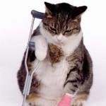 Как определить, что кошка заболела