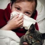 Как лечить аллергию на кошек?