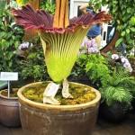 Интересные факты о комнатных растениях